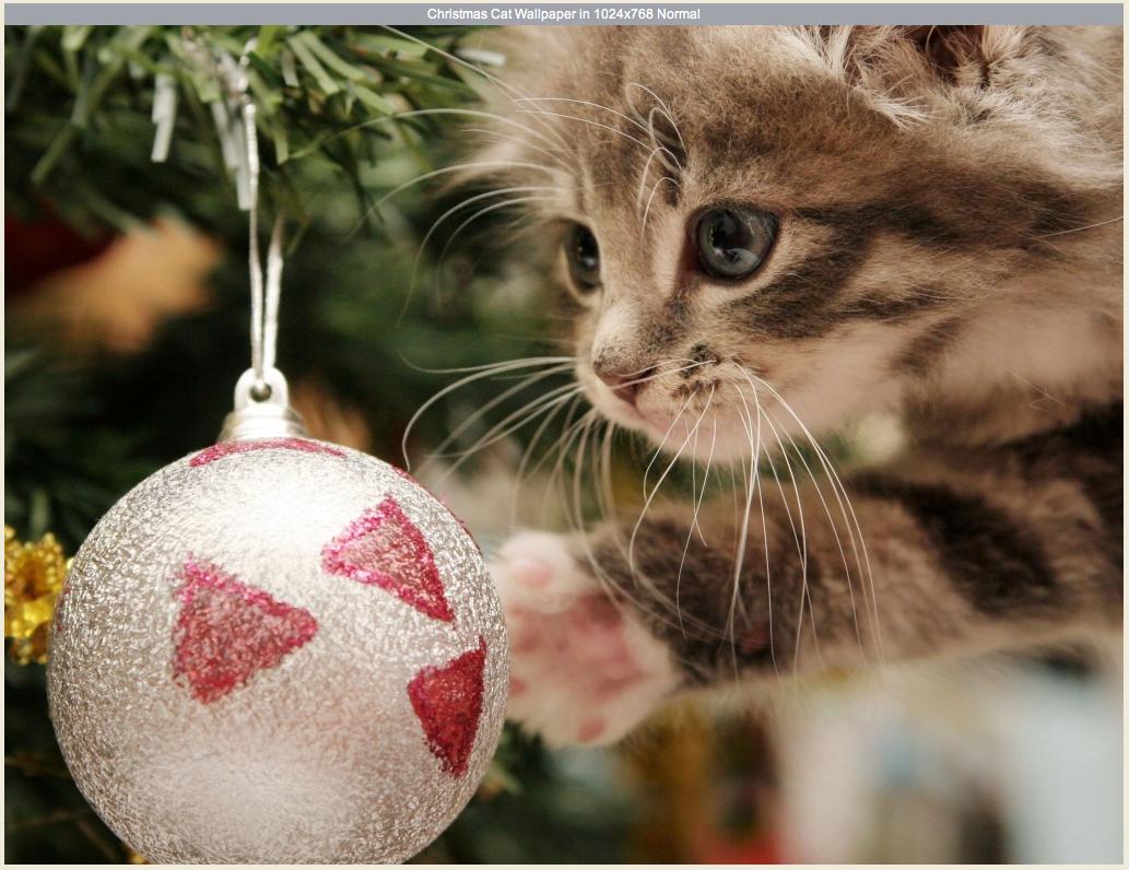 クリスマス猫の壁紙ダウンロード ネコまにあ 猫動画や癒し猫 面白い