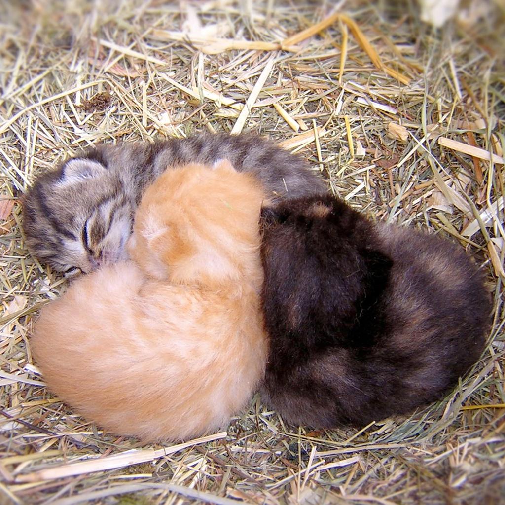 Ipadにぴったりな 猫の壁紙 ネコまにあ 猫動画や癒し猫 面白い猫